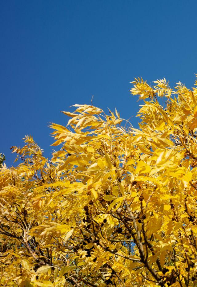 Le Parc de La Villette en automne