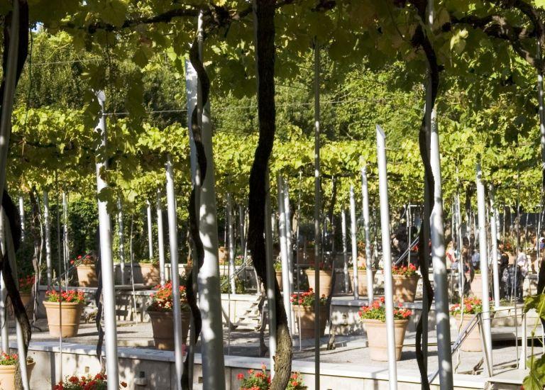 Jardin de la treille à La Villette