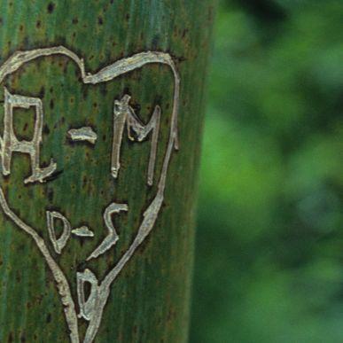 Les arbres de La Villette<br/>