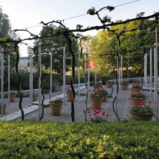 Les nouveaux jardins de la Villette - Jardin de la treille ©Marie-Sophie Leturcq