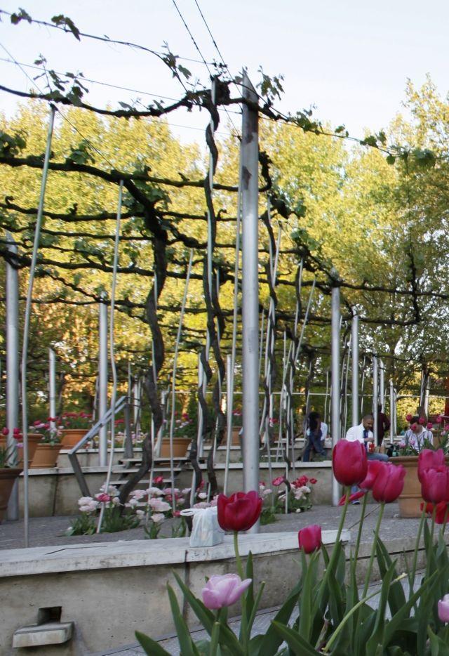 Jardin de la treille - la Villette