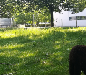 Le mouton Noir du Velay