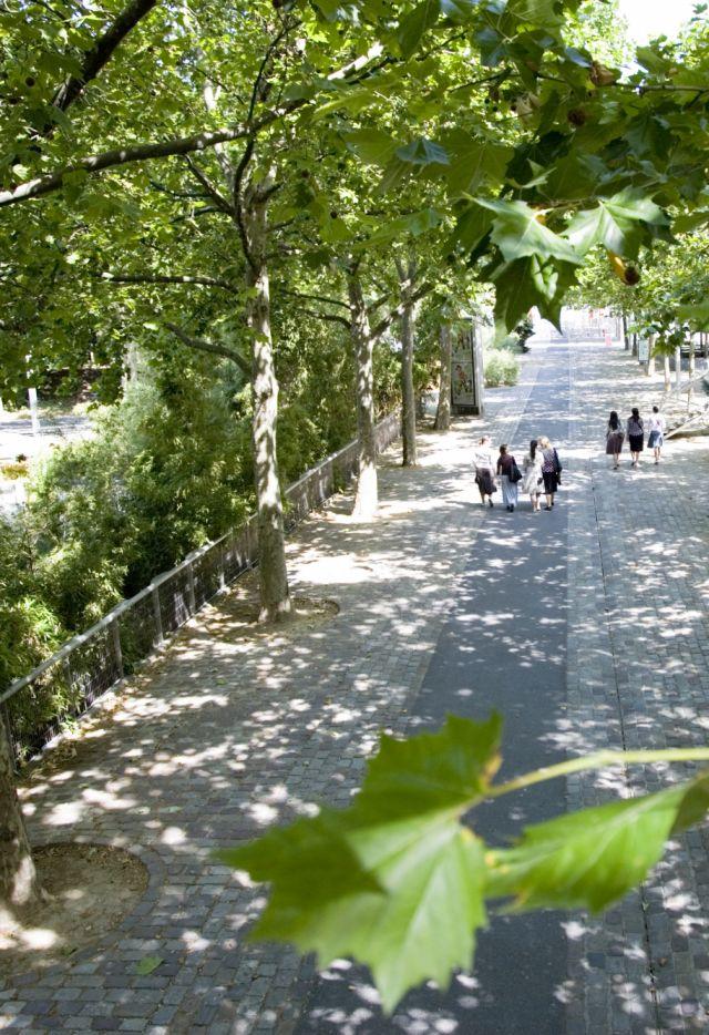 Parc de La Villette - allée du Zenith