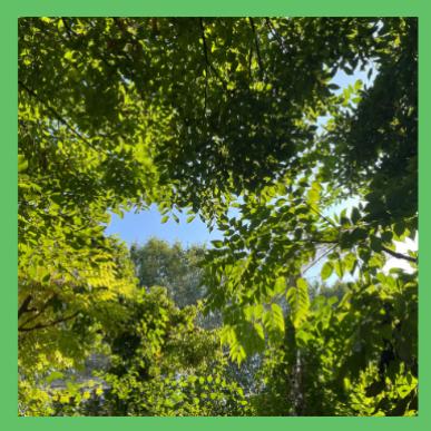 Les arbres à La Villette