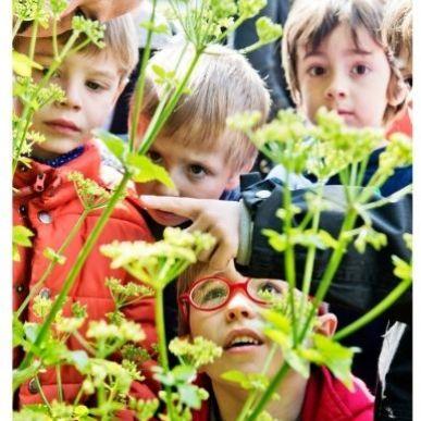 Les Insectes jardiniers